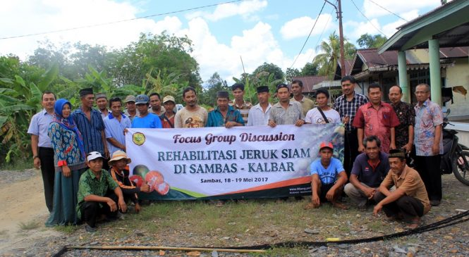 Rehabilitation activities of Pontianak Tangerine in Sambas Regency