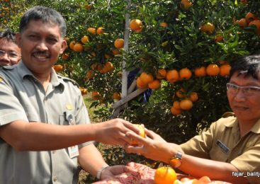 Boost the Care Towards Local Fruits Through Educational Tour and Pick Your Own Event of Citrus Fruits