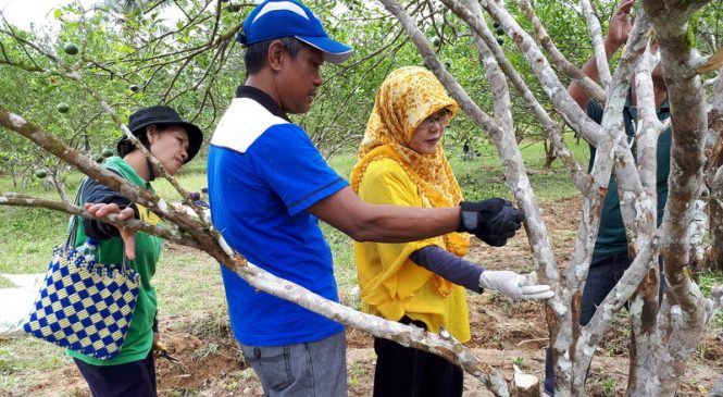 Dry land based IMHCO implementation in South Konawe