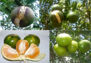 [cml_media_alt id='1280']pecah buah 4[/cml_media_alt]